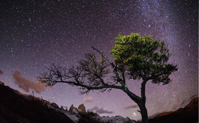 Night Sky Serengeti